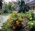 Ботанический сад пансионата в п. Отрадное, Ялта02