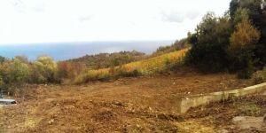 Купить земельный участок в Кипарисное, Алушта