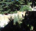 Дом с бассейном в Гаспре, Ялта 22